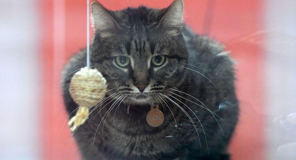 Архивное фото кота на выставке
