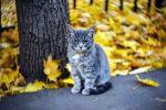 Котенок в осеннем парке