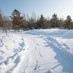 Зимний парк, дорога, иллюстративное фото