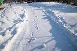 Снег, дорога, иллюстративное фото