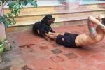 Пес помогает хозяину делать зарядку - видео