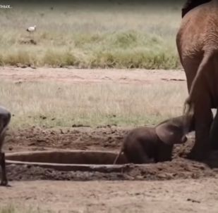 Удивительные случаи взаимовыручки у животных - видео