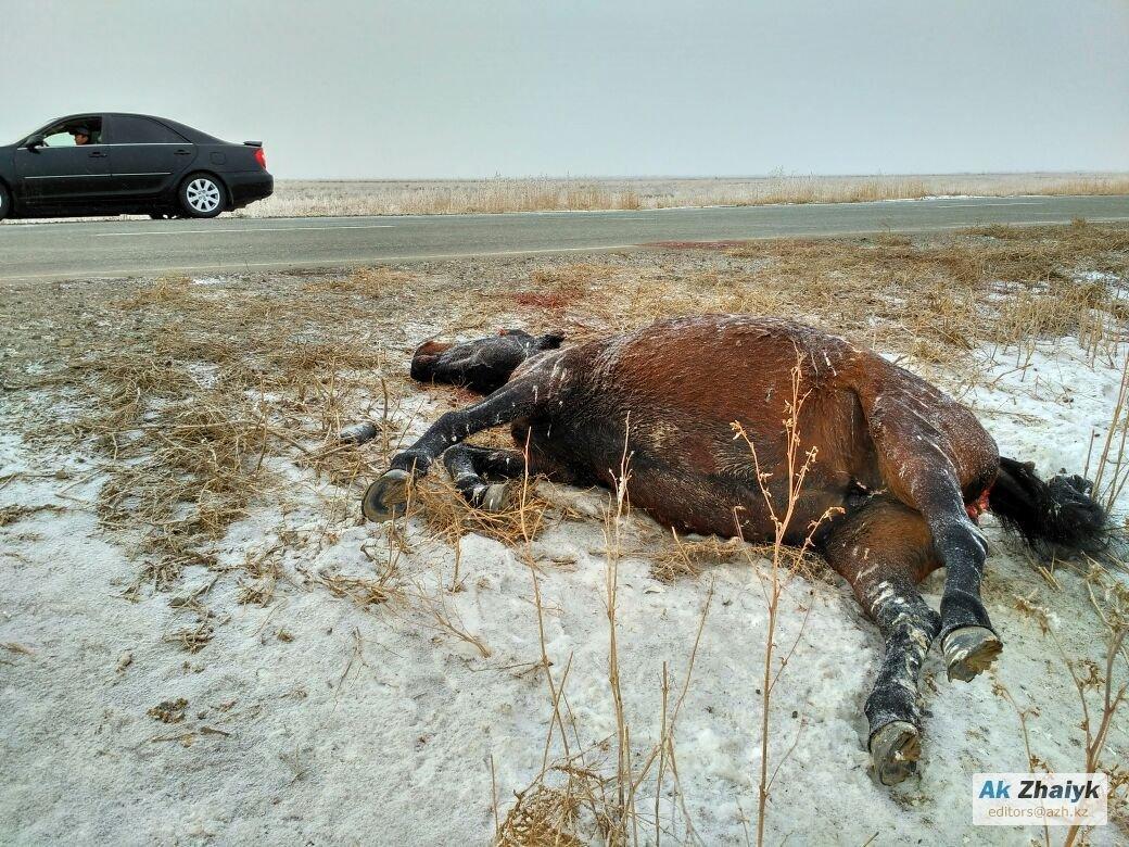 Лошадь погибла в результате ДТП