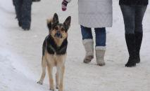 Бездомный пес на улице города, архивное фото