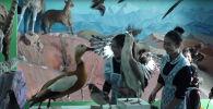 Местные жители приносят учителю мертвых животных — видео о необычном музее КР