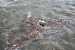 Река загрязнение