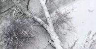 Дерево упало из-за снега