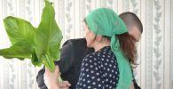 Заключенный в теплице колонии строгого режима вырастил цветы на 8 марта
