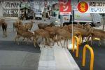 Как в фильме После людей: дикие животные заполонили карантинный город