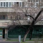 Между тем, в Алматы вовсю весна - зацвел урюк