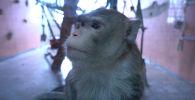 Животные Алматинского зоопарка находятся под круглосуточным наблюдением