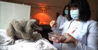 Впервые за десять лет: птенцы бородача вылупились в зоопарке Алматы - видео