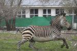 Животные Алматинского зоопарка скучают по посетителям