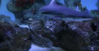Как кормят экзотических рыб в Алматинском зоопарке - видео