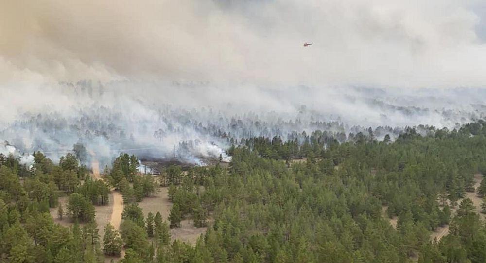 Пожар в сосновом бору близ Семея