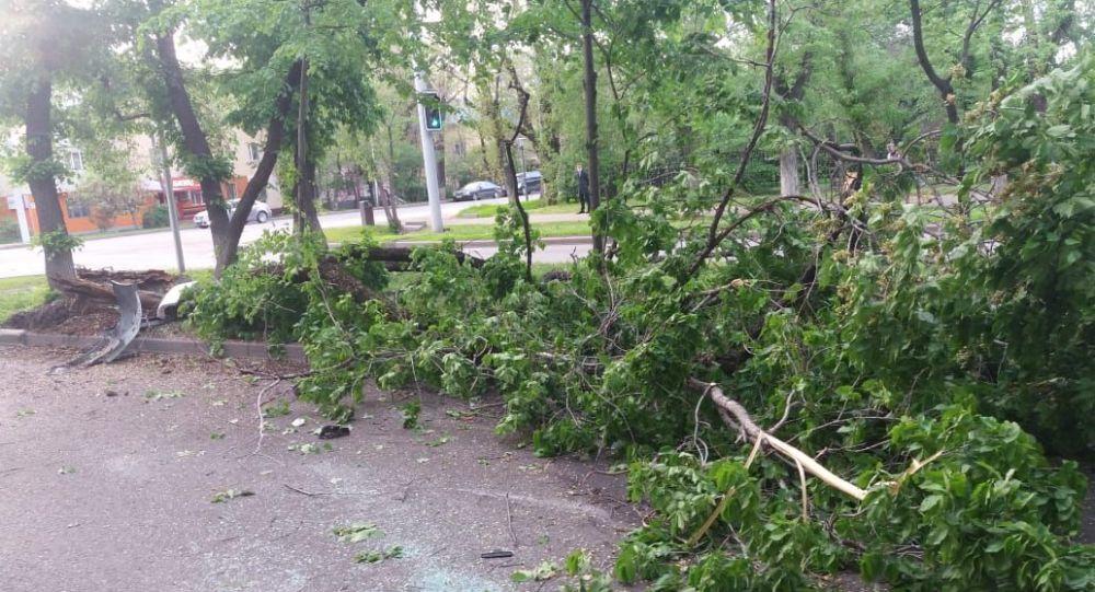 В Алматы автомашина снесла несколько деревьев и перевернулась, двое пострадали