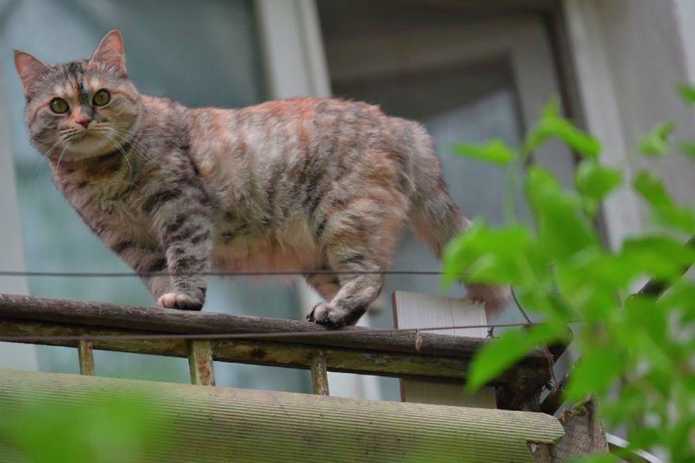 Домашние питомцы на карантине. Кошка Няша