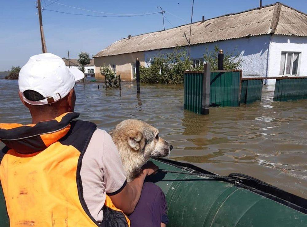 Мужчина с собакой на руках в лодке проплывает мимо затопленных домов в Мактааральском районе