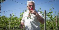 Розы в плену коронавируса: как цветовод переживает пандемию