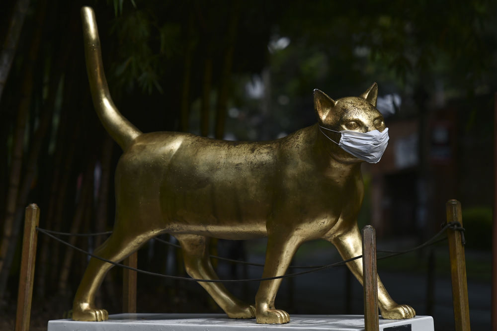 The sculpture La gata Calida by  Colombian artist Jose Horacio Martinez wears a face mask, on April 24, 2020, in Cali, Colombia.