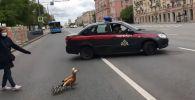 Пернатые и многодетные: для необычных пешеходов перекрыли дорогу в Москве
