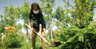 Сад памяти: необычная акция в честь героев-фронтовиков стартовала в Казахстане  - видео