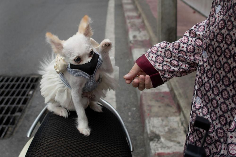 Собачка в пачке и защитной маске