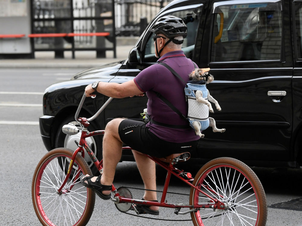 A man is seen cycling in London with a dog on his back, following the outbreak of the coronavirus disease (COVID-19), London, Britain, June 9, 2020.