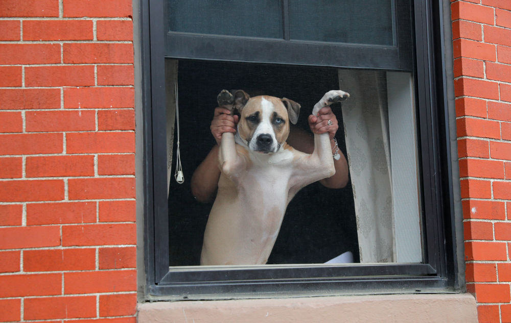 A dog and its owner watch from a window as demonstrators march past during a protest against racial inequality in the aftermath of the death in Minneapolis police custody of George Floyd in Boston, Massachusetts, U.S., June 7, 2020.