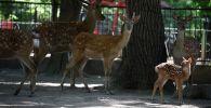 В Алматинском зоопарке во время карантина произошел беби-бум - умилительные кадры