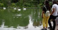 Как выглядит ботанический сад в Алматы после капитального ремонта - видео
