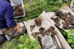Поисковики нашли в Латвии братскую могилу советских солдат