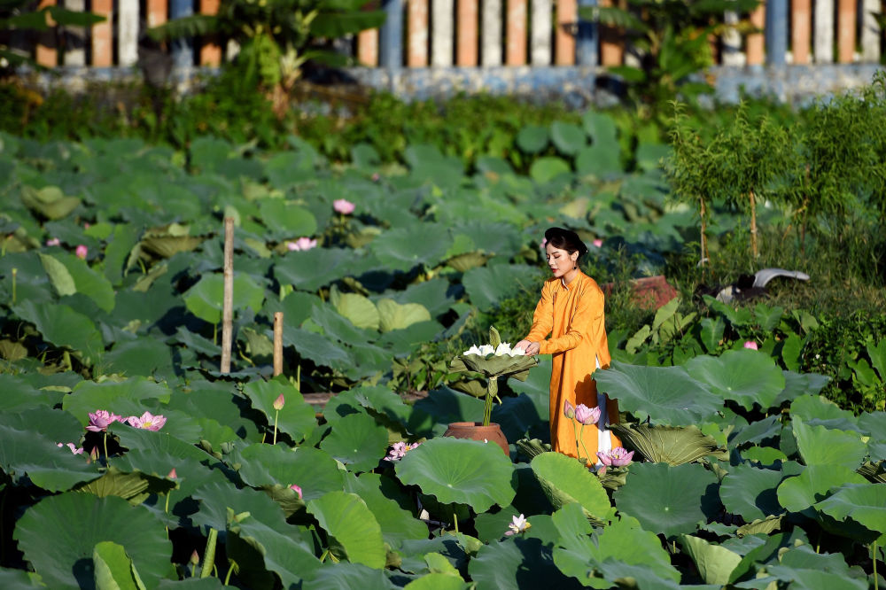 A woman poses for photographs during a photo shoot at the Westlake lotus ponds in Hanoi on June 13, 2020.