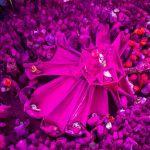 Андрей Стенин атындағы конкурстың Менің планетам. Жеке фотосурет номинациясының қысқа тізіміне енген үнді фотографы Shubham Kothavale-нің Қызғылт фестиваль туындысы.