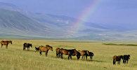 Лошади на горном пастбище