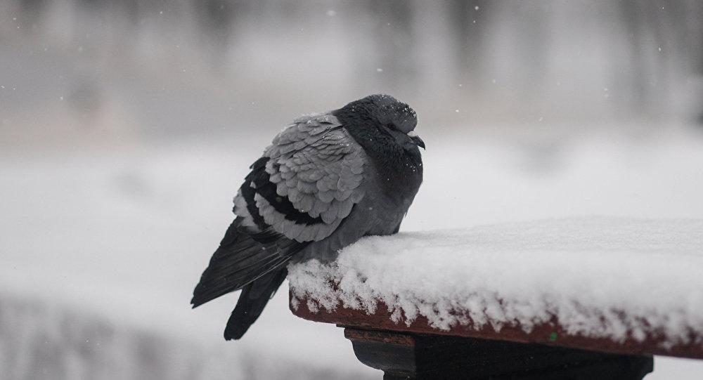Зима в Великом Новгороде