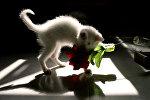 Кошка играет с искусственным цветком