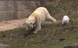 Медвежонок в Мюнхене