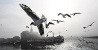 Чайки летают над туманным Босфором в Стамбуле, фото из архива