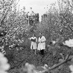 Ученые садоводы ведут наблюдение за фруктовыми деревьями