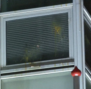 Протестующие забросали посольство Нидерландов в Анкаре яйцами