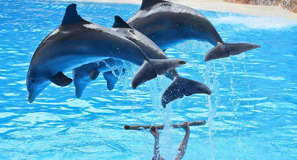 Архивное фото шоу дельфинов