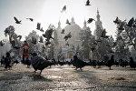 Виды Алматы, женщина кормит голубей