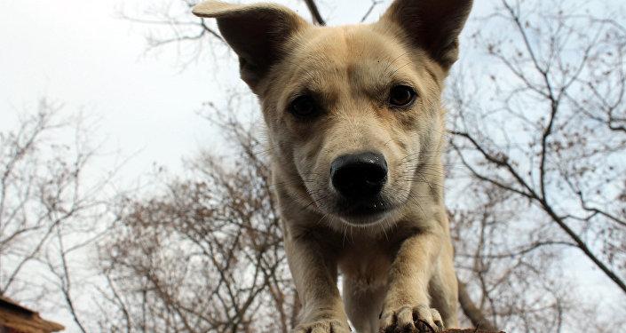 Архивное фото собаки