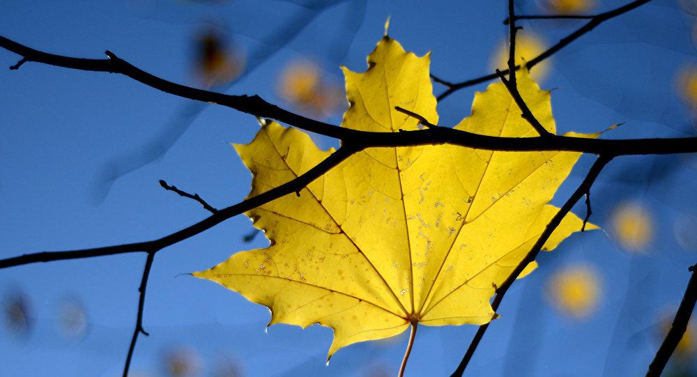 Осень. Архивное фото