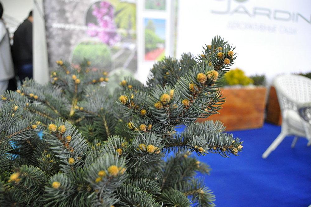 Выставка цветов Astana Flora Expo 2017