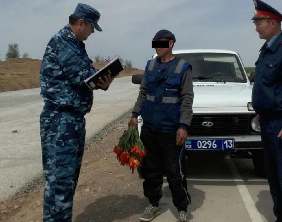 Житель ЮКО незаконно собирал дикие тюльпаны