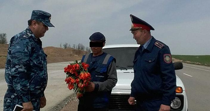 Житель ЮКО незаконно торговал дикими тюльпанами