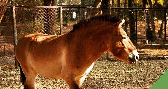 Лошадь по кличке Аяз из алматинского зоопарка