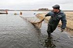 Архивное фото отлова рыбы